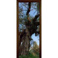 Стеклянная дверь АКМА IMAGINATION FOREST